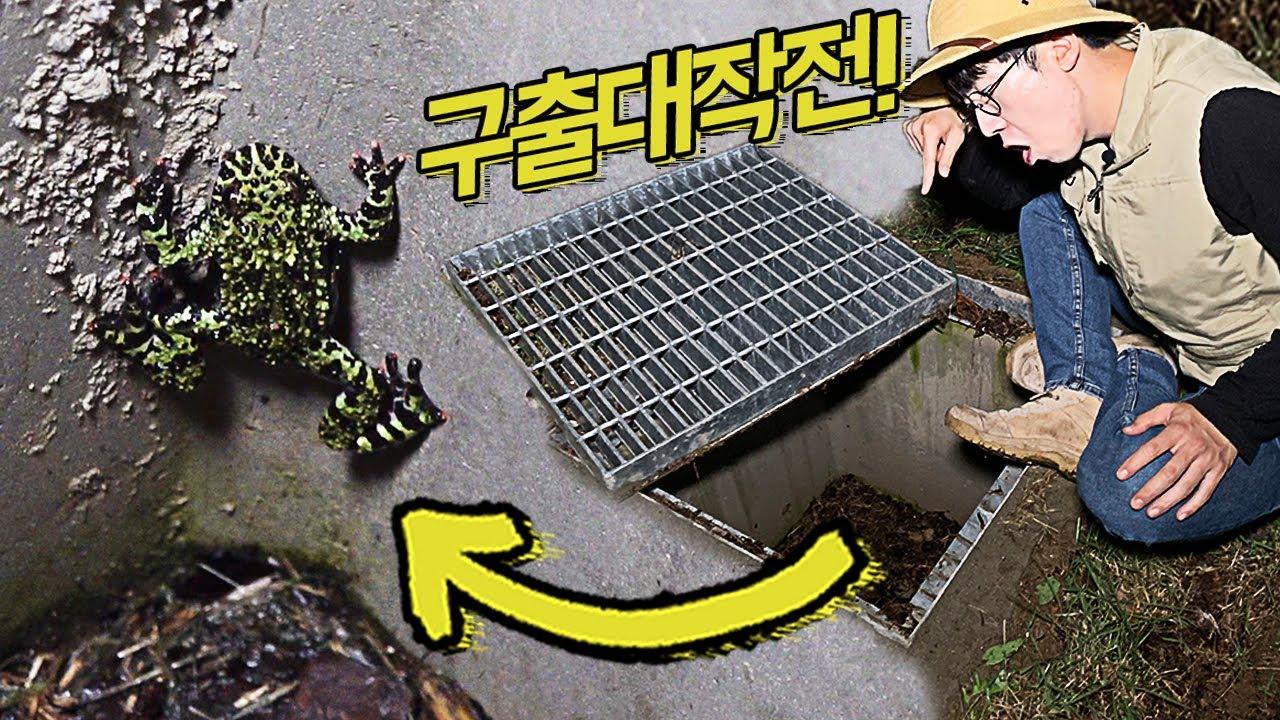 배수구 생물 구출 작전!!!
