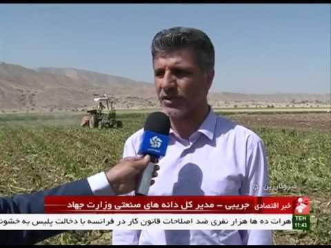 Iran Qir & Karzin county, Sugarbeet harvest برداشت چغندرقند شهرستان قيروكارزين ايران