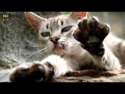 Annonce chat Suisse centrale Suisse - GoldAnnonces #animaux