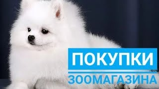 Покупки из Зоомагазина / Шпиц Фенечка