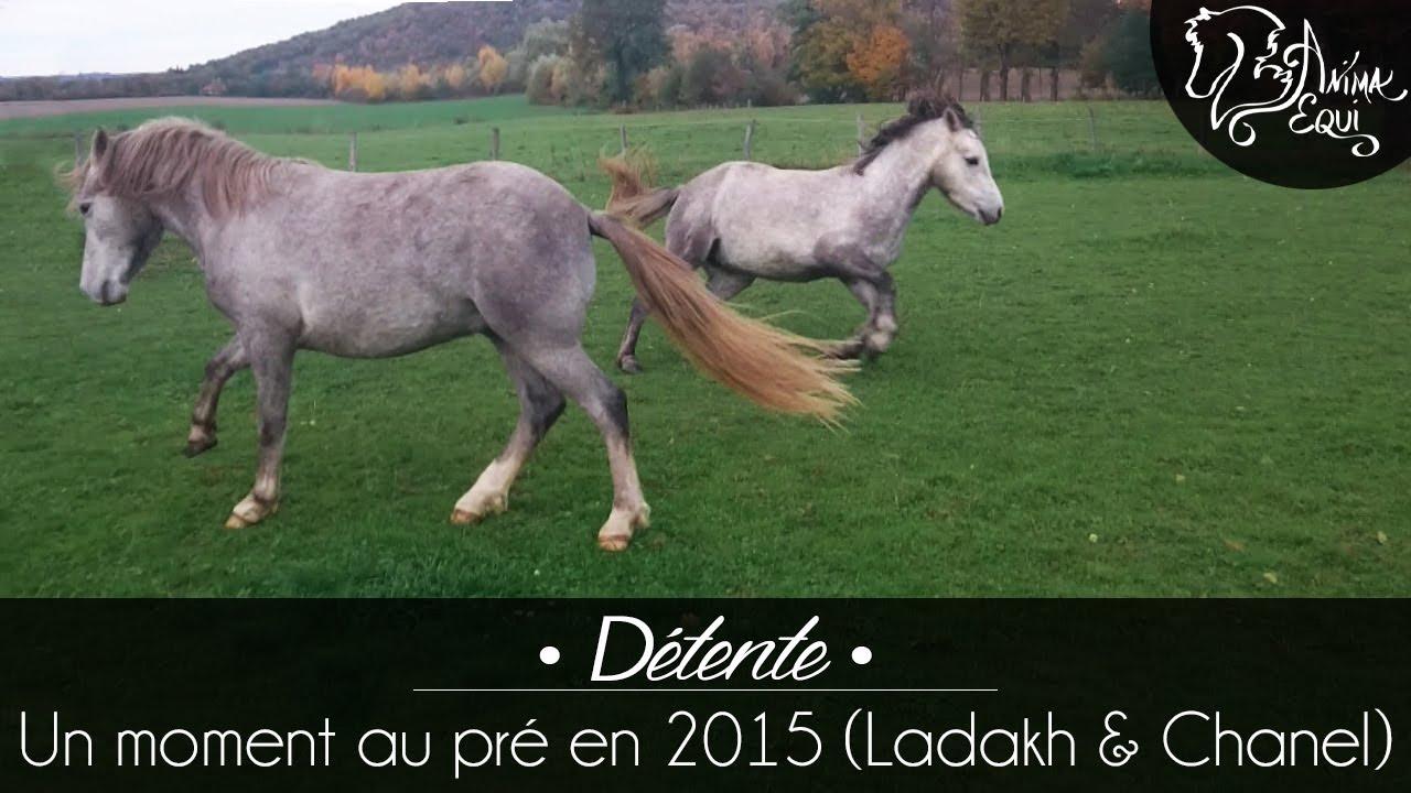 d1e556a8f715c PRATIQUE • Ladakh   Chanel   Un moment au pré - YouTube
