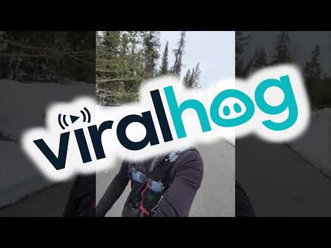 Runner-Followed-by-Black-Bear-in-Grand-Teton-National-Park-ViralHog