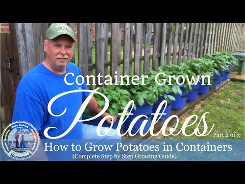 How to Grow Potatoes In Containers (Complete Step by Step Growing Guide) Part 2  of 3