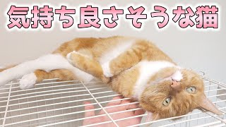 cute cat stroked happily