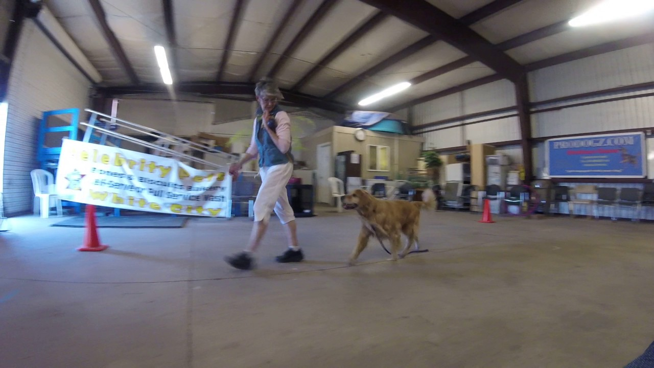 Dog Training Medford Oregon