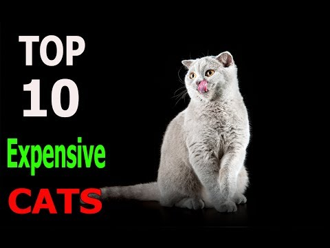 Top 10 Expensive cat breeds | Top 10 animals