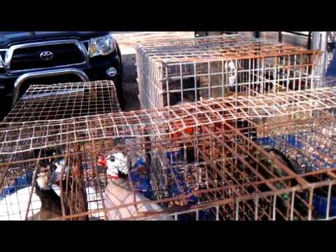 Los Gallos del flea market j & j in ga