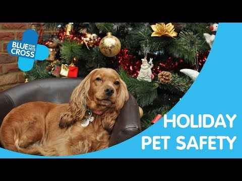 Christmas Survival Guide: keep your pet safe this Christmas