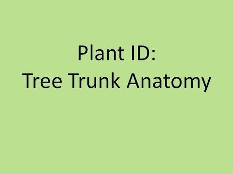 Plant ID: Tree Trunk Anatomy
