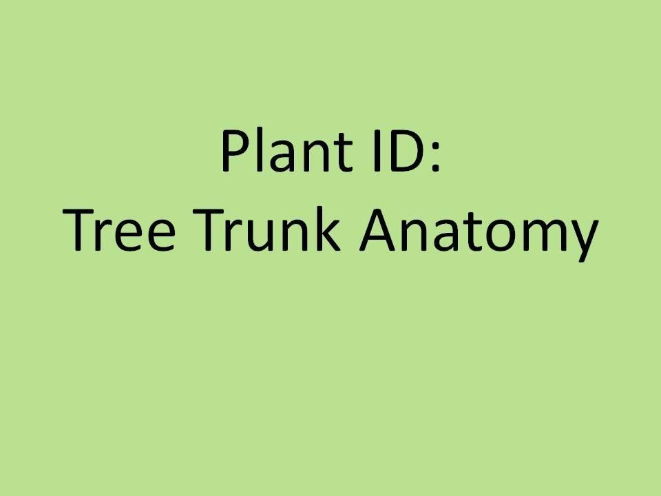 Plant ID: Tree Trunk Anatomy - YouTube