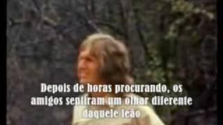Verdadeira Amizade - Reencontro Entre Um Leão E Seus Amigos Humanos ...