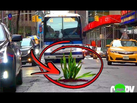 Planting Trees In The Streets Of NYC! (Social Experiment)