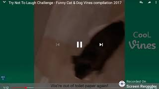 Try not to laugh challenge funny cats