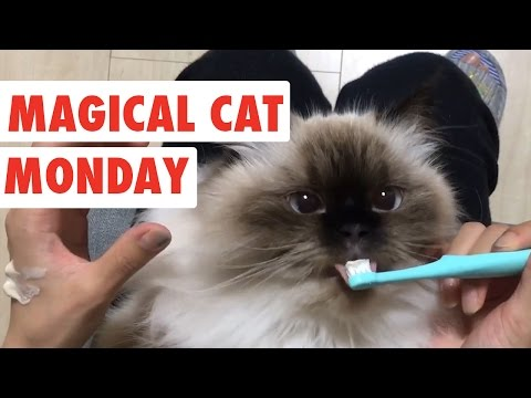 Thumbnail: Magical Monday Cats | Funny Cat Video Compilation 2017