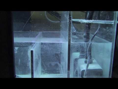 SW Rebuild - Part 13 - Dealing With Microbubbles