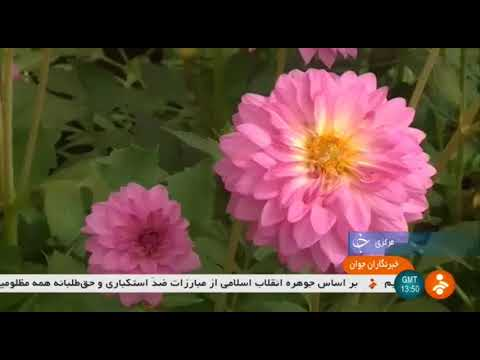 Iran Flowers & Plants town, Mahalat county شهرستان محلات شهر