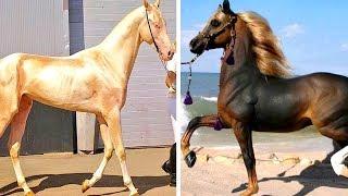 7 Cavalos Exóticos Mais Caros Do Mundo