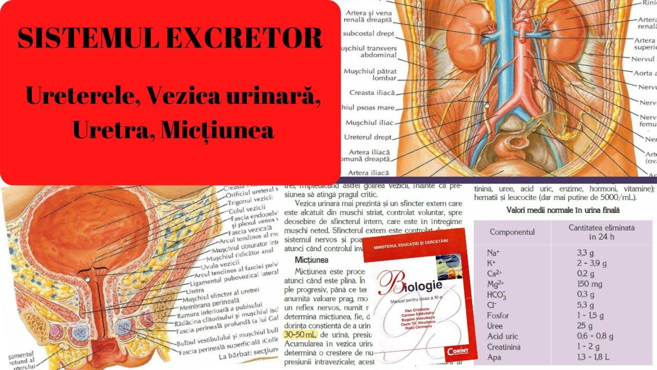 tratamentul și schema membranei ovariene pediatrice laryngeal papilloma of larynx