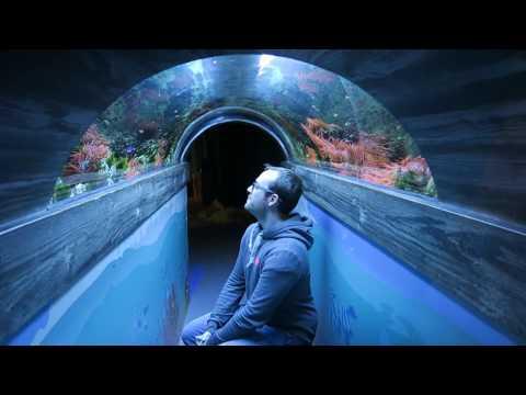 Aquarium Time! - SEA LIFE Brighton
