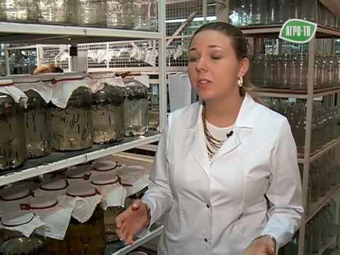 Гирудин: Ингибирование тромбина гирудином