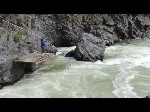 Spring Chinook Salmon Dipnetter On Klickitat River