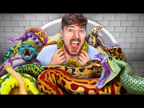 Would You Sit In Snakes For $10,000? - MrBeast