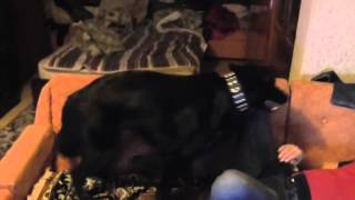 Собака извращенка/Crazy facking dog