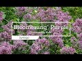 30 Seconds with Bloomerang® Purple Lilac