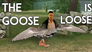 The Goose is Loose - Speedrunner RWhiteGoose