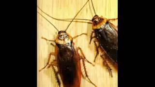 уничтожение тараканов(http://centrdoktordez.ru/unichtozhenie-tarakanov Уничтожение тараканов в Челябинске. Звоните., 2015-06-25T20:35:50.000Z)