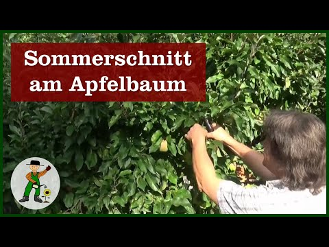 apfelbaum sommerschnitt youtube. Black Bedroom Furniture Sets. Home Design Ideas