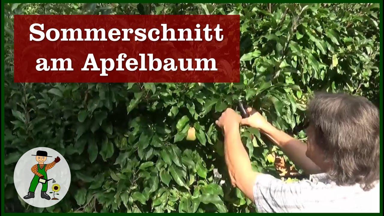 Ganz und zu Extrem Apfelbaum Sommerschnitt - YouTube #BH_31