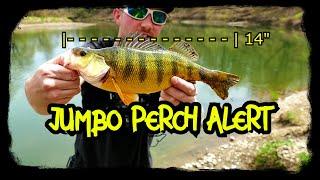 Jumbo perch walleye and more Fishing New York