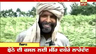 Heavy rain in Punjab damages crops: Farmers despair