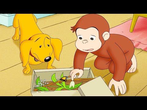 おさるのジョージ 🐵 にょろにょろむすこ | 子供向けの漫画 | WildBrain