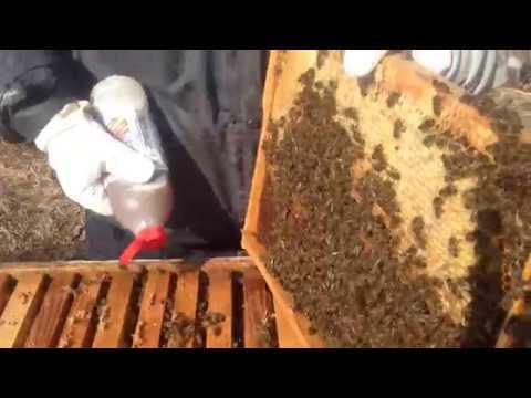 Hive Clean на BEE VITAL обработка DB и LR ,пчели,Varoa.