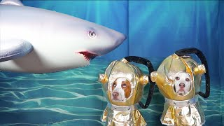 Dogs Pranked by Octopus & Shark: Funny Dog Prank Maymo & Potpie