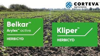 Wiosenna lustracja pola rzepaku, na którym zastosowano jesienią herbicydy Belkar™ + Kliper™.