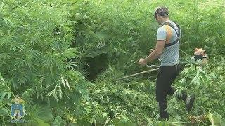 Полицейские края вышли на борьбу с наркотиками.