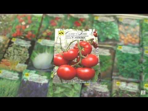 Гибриды тепличных томатов нового поколения .