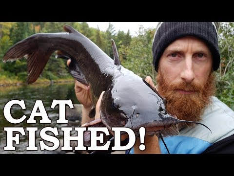 BEAVER MEAT for BAIT (Catfished)! | Works Everytime 100% WILD FOODS!  Ep11