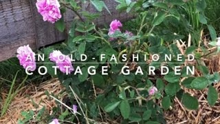 Designing an Old-Fashioned Cottage Garden