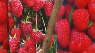 видео Плодово-ягодные кустарники