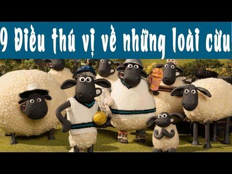 9 Điều thú vị về những chú cừu | Những chú cừu thông minh | Shaun The Sheep