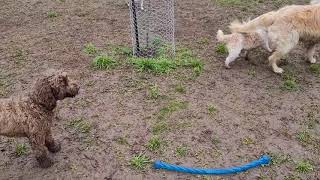 Doggy Daycare  14.07.2021