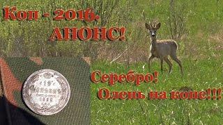 Олень на копе. Скоро - Удачный коп май-2016!