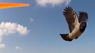 Drone and animals. Животные сбивают беспилотник. Подборка. Нападение птиц, кошек, собак и др.