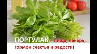 144. ПОРТУЛАК — пища, лекарь, гормон счастья и радости)