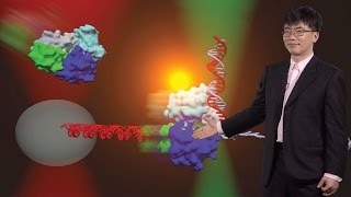 Taekjip Ha (Johns Hopkins / HHMI) 3: Investigating DNA Helicases using single molecule technologies