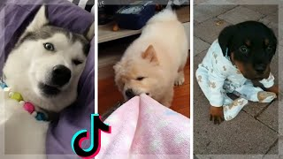 Best Doggos & Cutest Puppers ~ Funny Dogs Compilation